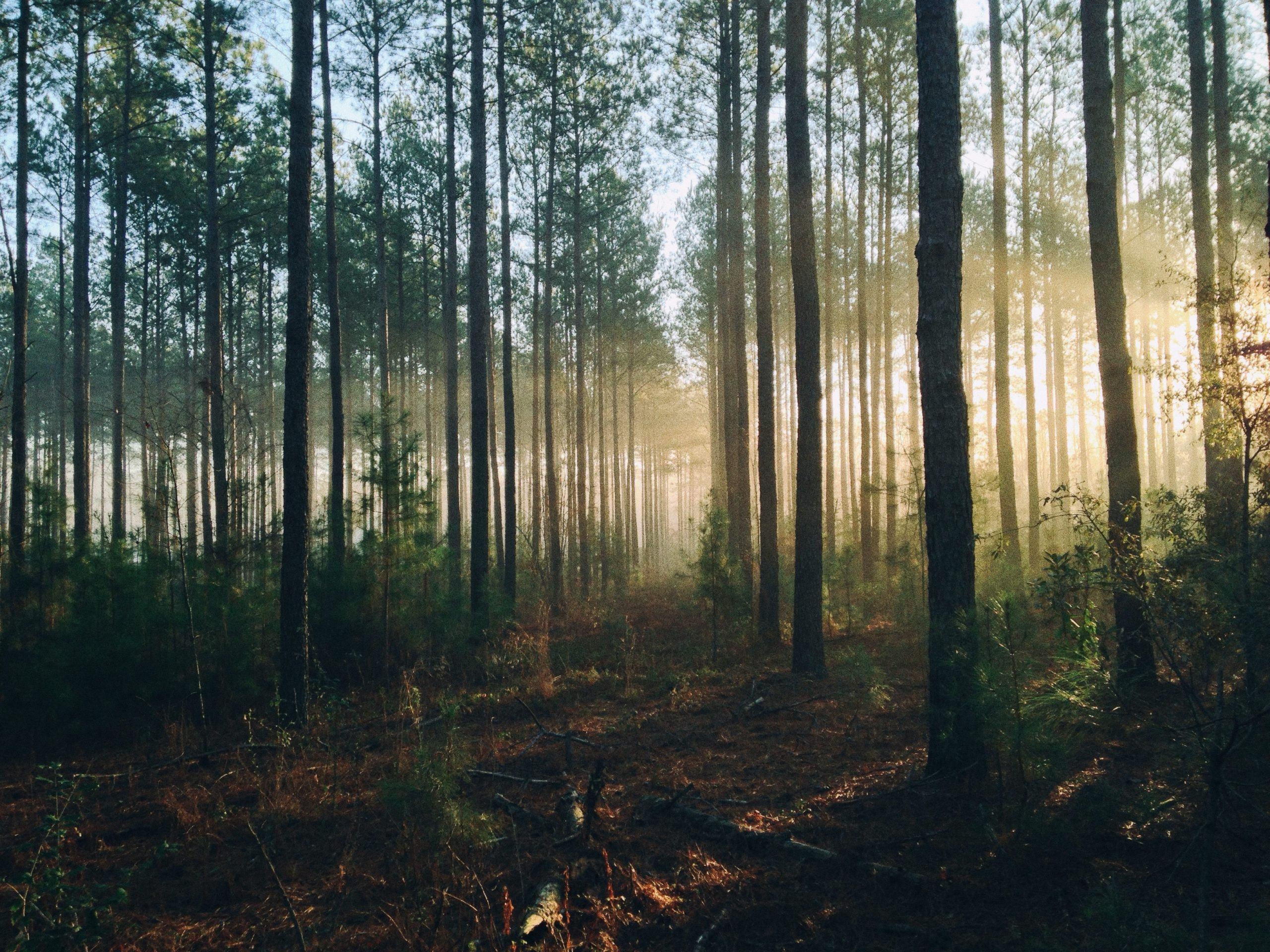 forest with morning light